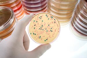 Лейкоциты повышаются при беременности