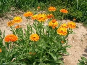 Лекарственные травы оказывают различное биологическое действие
