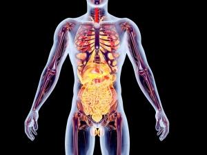 Эндокринная система несет ответственность за большинство процессов в организме