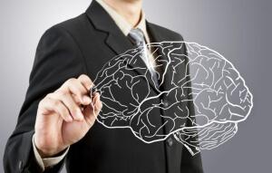 Кора мозга исследуется различными методами