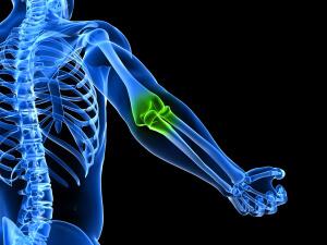 Кости человека бывают различных видов