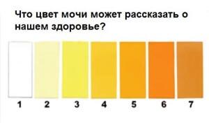 Как определить здоровый цвет мочи