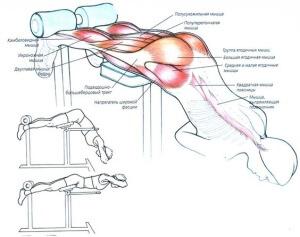 Гиперэкстензия для спины, упражнения для укрепления мышц