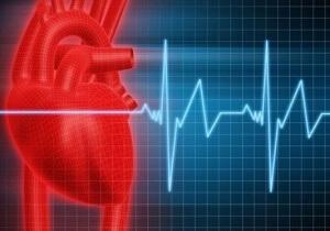 Ритмичность и последовательность сокращений сердечных отделов