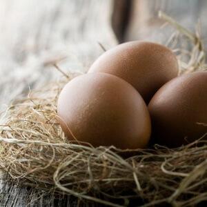 Что же такое куриные яйца — вред или польза