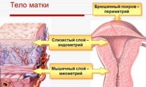 Что такое миометрий: понятие, структура и особенности распознавания в медицинских исследованиях