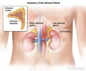 Что такое аденома левого надпочечника, виды, причины и симптомы заболевания, диагностика, лечение