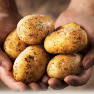 Картошка: полезные свойства и возможный вред