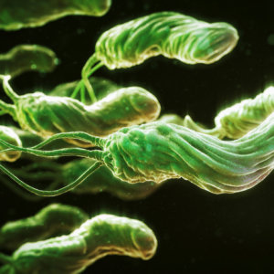 Антибиотик против хеликобактер пилори: лечение заболевания