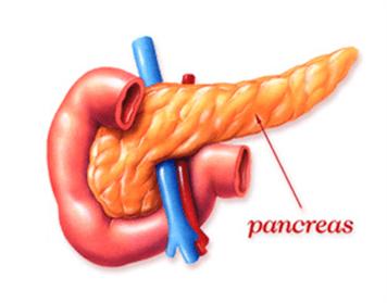 Какие продукты полезны для поджелудочной железы: рекомендации