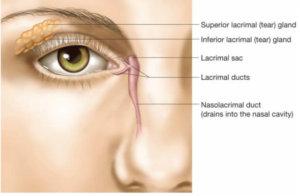 Синдром сухого глаза: лечение, препараты, диагностирование