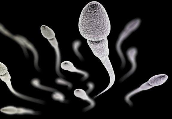 Сперматозоиды в слюне присоединяюсь