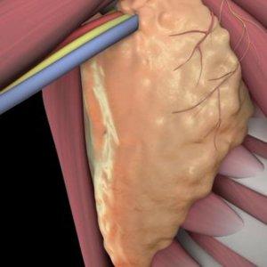 Почему болит лимфоузел под мышкой: типы болезни, методы лечения