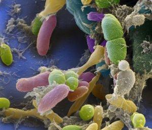 Микробы в организме