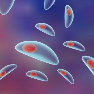 Клетки токсоплазмы