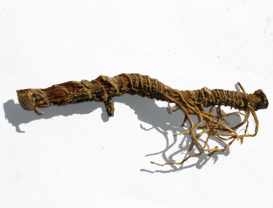 Лечение онихомикоза корнем аира