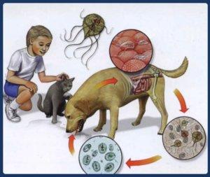 Как можно заразиться