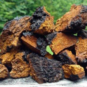 Лечение грибом чага различных патологий, рецепты