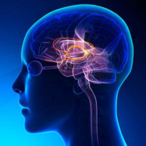 Передача импульсов от мозга