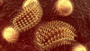 Лечение бешенства у людей — как предотвратить летальный исход