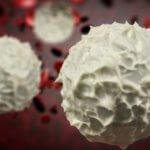 Белые тельца лейкоциты