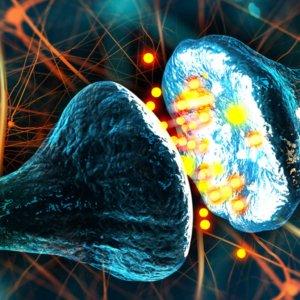Двусторонняя связь в нервах