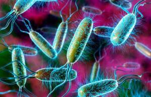 В кишечнике человека обитает множество бактерий