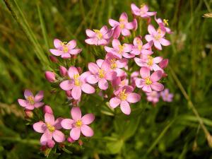 Лекарственные травы используются с давних времен