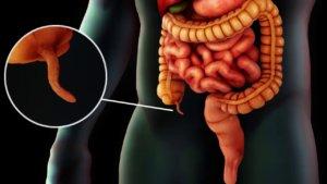 Роль аппендикса в нашем организме
