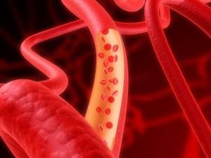 Кровь выполняет множество функций