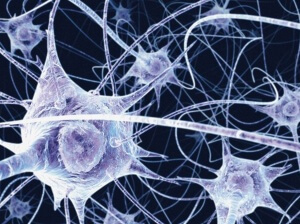 Нервная система является сложным механизмом