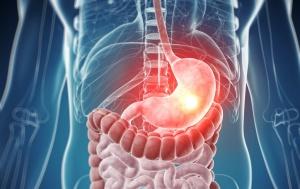 Органы пищеварения выполняют важные функции