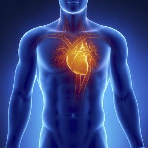 Симптомы болезней сердца влияют на весь организм