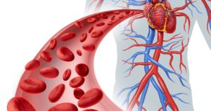 Положительное влияние на кровообращение