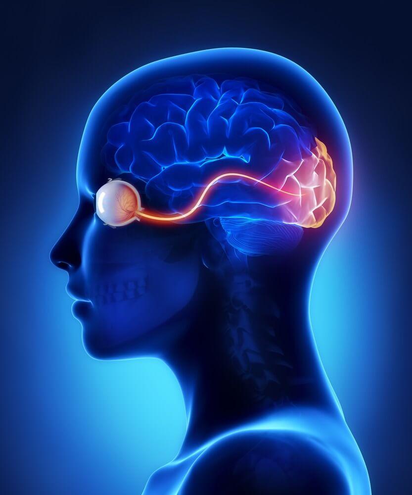 Строение глазного нерва