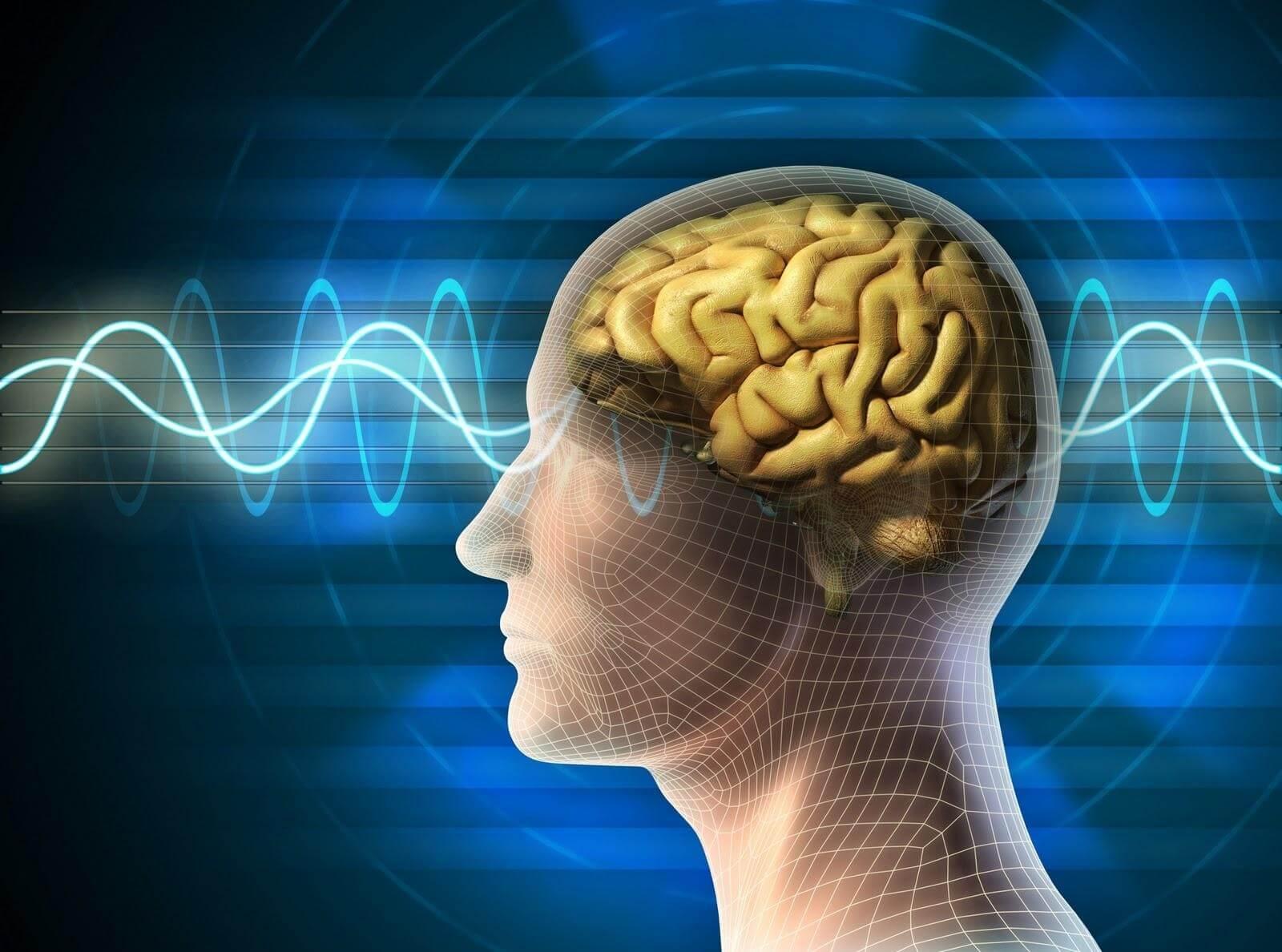 Мозг контролирует все чувства человека