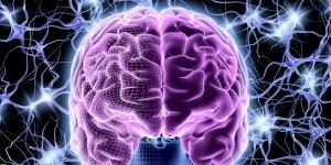 Каждый участок коры головного мозга выполняет определенные функции