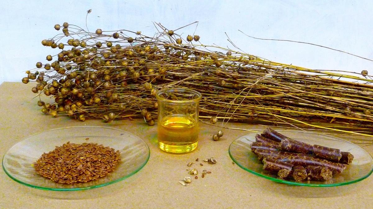 Ляняное масло характеризуется особой горечью