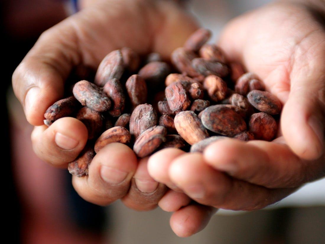 Польза бобов какао