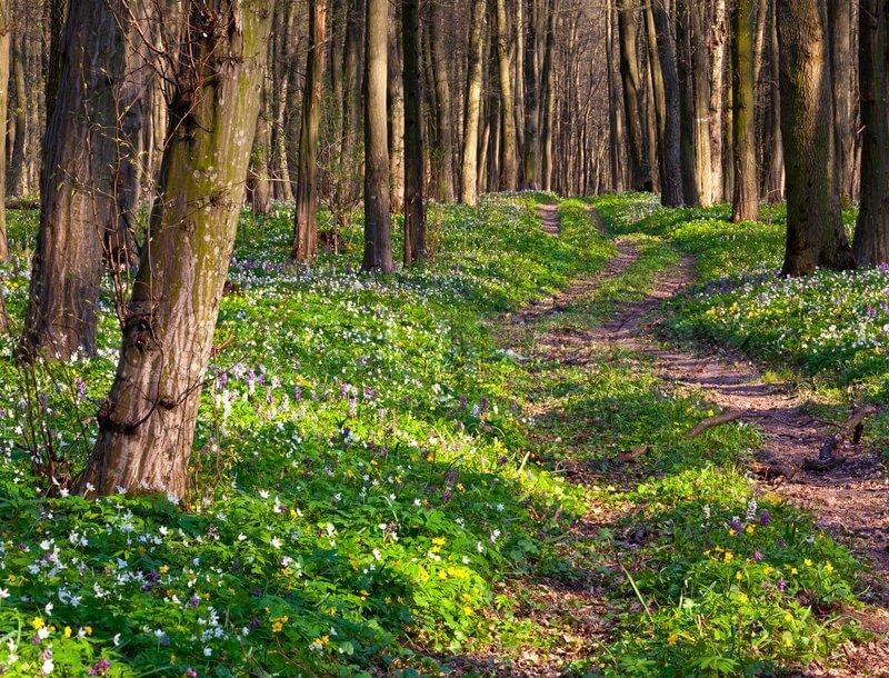 Сбор в весеннем лесу
