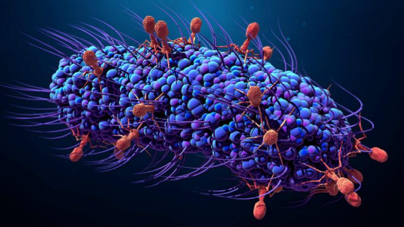 Действие бактериофагов
