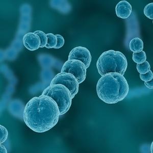 Чем лечить стрептококковую инфекцию и как ее диагностировать?