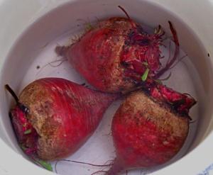 Какие они - идеальные корнеплоды свеклы