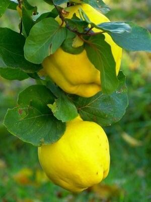Долгоиграющий кладезь витаминов