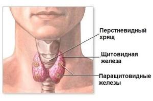 Наилучшие способы исследования щитовидки