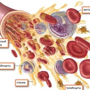 Эритроциты, образование в костном мозге: структура, процесс формирования и задачи