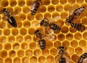 Мед из пчелиных сот