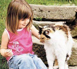 Источник микоза - кошки