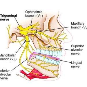 Неврит тройничного нерва, симптомы, причины заболевания, методы диагностики и терапии