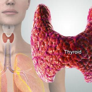 Больная щитовидка: симптомы основных заболеваний, общие признаки, методы определения патологии